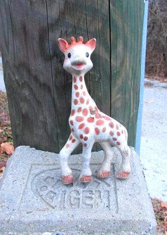 Pozabljena žirafa Sophie